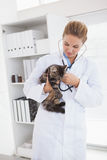 Vet examining a small cat. In her office royalty free stock photos