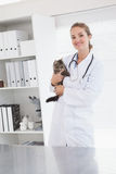 Vet examining a small cat. In her office stock images