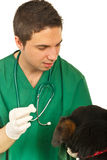 Vet explain to dog to take a pill Stock Photography