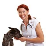 Vet feeding a dog. Happy smiling female vet feeding a dog Royalty Free Stock Images