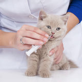 Vet feeding kitten with a syringe Royalty Free Stock Photos