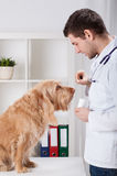 Vet giving medicament to dog. Vet during giving medicament to dog, vertical stock images