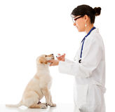 Vet giving medicine to a puppy Royalty Free Stock Images