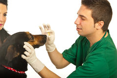 Vet giving pill to dog Royalty Free Stock Images
