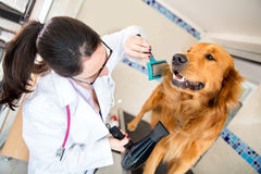 Vet grooming a dog Royalty Free Stock Photos