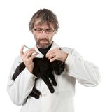 Vet had injected kitten Royalty Free Stock Photos