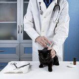 Vet had injected kitten Stock Photo