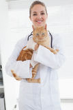 Vet holding an adorable cat. In her office stock photo