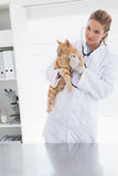 Vet holding an adorable cat. In her office royalty free stock photos