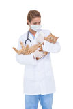 Vet holding an adorable cat Stock Photography