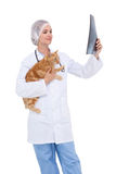 Vet holding cat and looking at xray Stock Images