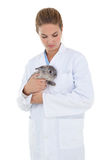 Vet holding a cute bunny rabbit Royalty Free Stock Photography