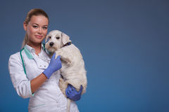 Vet holding a cute dog Royalty Free Stock Photo