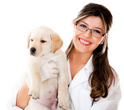 Vet holding a little dog Royalty Free Stock Photography