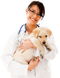 Vet holding a little puppy Royalty Free Stock Photo