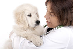 Vet holding a little puppy dog Stock Photo