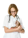 Vet holding a little puppy sharpei dog. Stock Photography