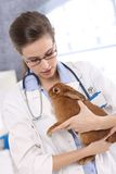 Vet holding pet rabbit patient Royalty Free Stock Photo