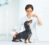 Vet holds medication for dog Royalty Free Stock Photo