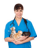Vet holds three kittens. isolated on white background Royalty Free Stock Images