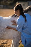 Vet injecting horse at barn. Female vet injecting horse at barn royalty free stock photo