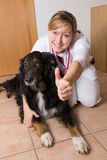 Vet kneeling with a dog. On the ground Royalty Free Stock Photography