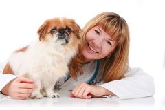 Vet and little dog. Stock Photo