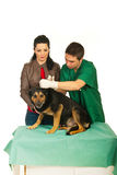 Vet male cleaning dog ears. And his owner women support dog isolated onw hite background Stock Photo