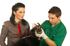 Vet male examine ear dog. And his owner looking attentive isolated on white background Royalty Free Stock Photos