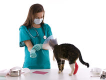 Vet in medical mask with cat in surgery. Stock Images