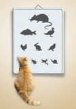 Vet optometry chart for cats. Eye exam for cats royalty free stock images