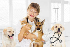 Vet and puppy and kitten in clinic Stock Image