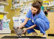 Vet putting cat on the weight scale at veterinarian clinic. Stock Images