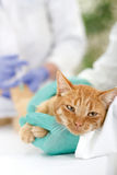 Vet  ready for review  a little cat Stock Images