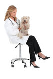 Vet sat with small dog Royalty Free Stock Photo