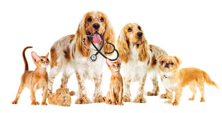 Vet set of pets. On white background Royalty Free Stock Photo