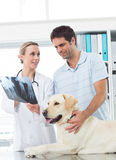 Vet showing Xray of dog to pet owner Stock Photo