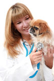 Vet and small dog. Royalty Free Stock Image