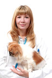 Vet and small dog. Royalty Free Stock Photography