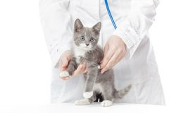 Vet with stethoscope and kitten Stock Image