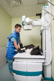 Vet taking out X-ray of a dog. Dog receiving an x-ray at a veterinary clinic royalty free stock photo