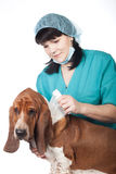 Vet is taping up a dog Stock Photo