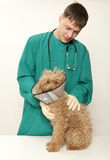 Vet and toy poodle Royalty Free Stock Image