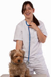 Vet in training. Young brunette hispanic Animal nurse or Veterinarian examining a pet Yorkshire Terrier Dog royalty free stock photo