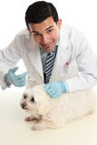 Vet treating a sick animal Stock Photography