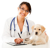 Vet using technology Stock Photos