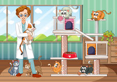 Vet working at animal hospital with many cats. Illustration Stock Image