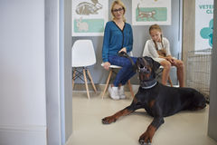 In the vet's office Stock Photography
