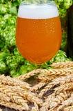 Veteöl i exponeringsglas Royaltyfria Foton