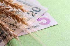 Veteöron på dollarräkningar Tjugofem US dollar Gr?n bakgrund Begreppet av artikel-pengar förhållanden royaltyfria bilder